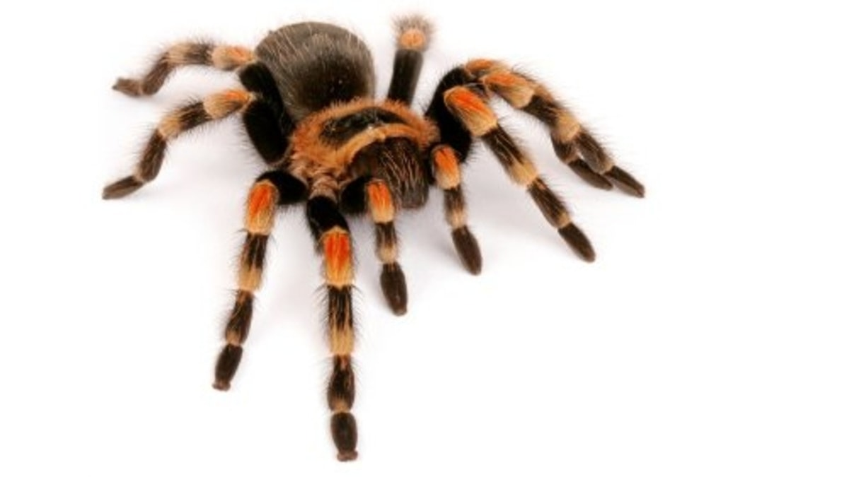 Picture of spider - fear of spiders